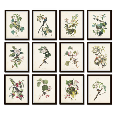 Audubon Birds Print Set No. 25