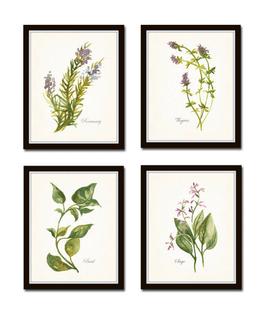 Watercolor Herbs Print Set No. 6