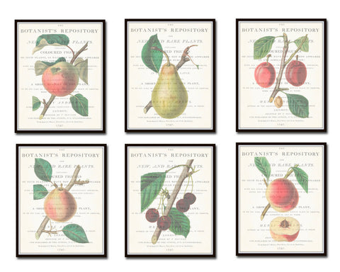 Vintage Fruit Botanical Print Set No. 1