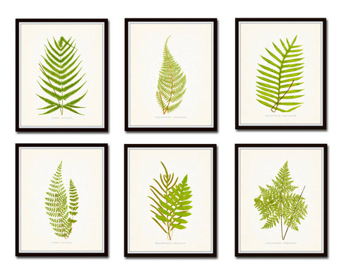 Vintage Ferns Print Set No. 1 - Giclee Art Prints