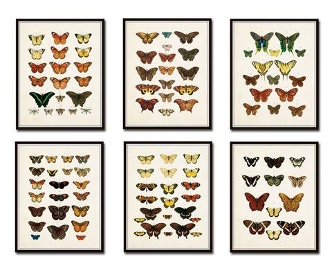 Vintage Butterfly Print Set 1 - Giclee Canvas Prints