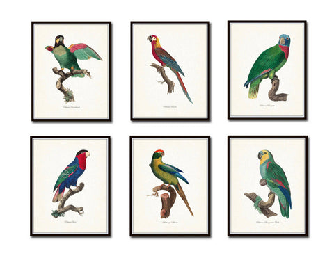 French Parrot Print Set Of Six Giclee Canvas Prints