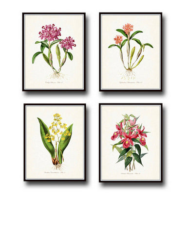 Tropical Orchids Botanical Print Set No. 2 - Giclee Art Prints