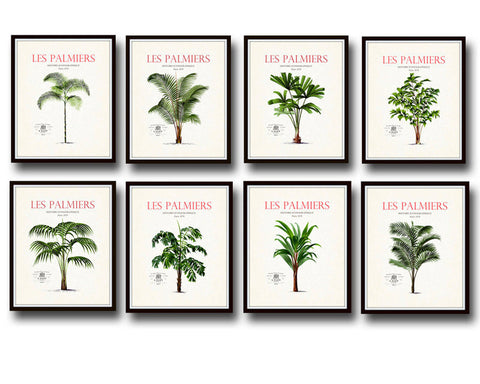 Vintage French Palm Tree Print Set No 10 - 8 Prints