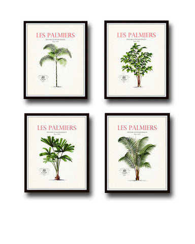Vintage French Palm Tree Print Set No. 2 - Giclee Canvas Art Prints