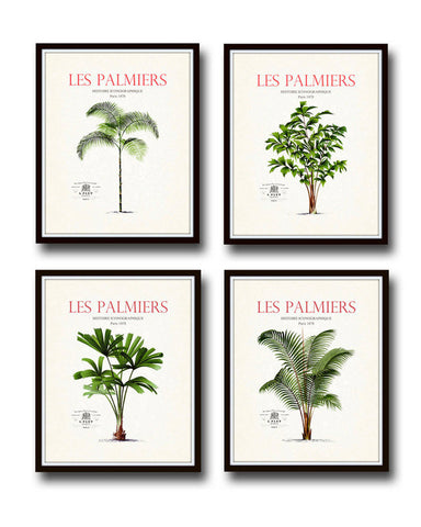 Les Palmiers Vintage French Palm Tree Giclee Canvas Print Set - 4 Prints
