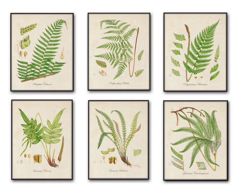 British Ferns Print Botanical Set 2 - Giclee Canvas Art Prints