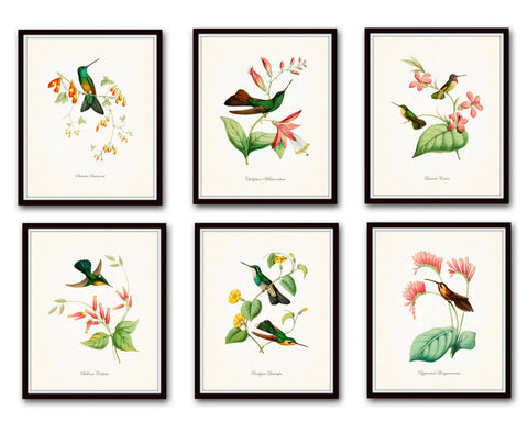 Hummingbird Print Set 1 - Giclee Canvas Art Bird Prints