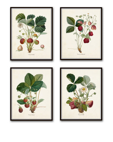 French Strawberry Print Set No. 1 - Giclee Canvas Art Prints