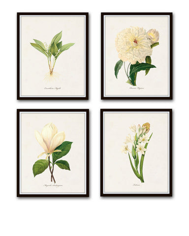 White Botanicals Print Set No. 1 - Giclee Canvas Art Prints