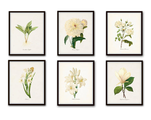 White Botanical Print Set No. 6 - Giclee Canvas Art Prints