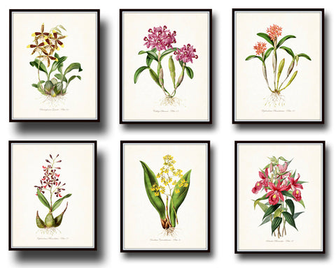 Tropical Orchids Botanical Print Set No. 4 - Giclee Canvas Art Prints
