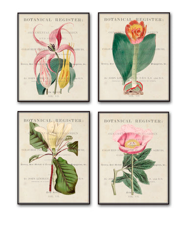 Vintage Botanical Print Set No.12 - Giclee Canvas Art Prints - Antique Botanical Prints - Wall Art - Prints - Posters - Botanical Print Sets