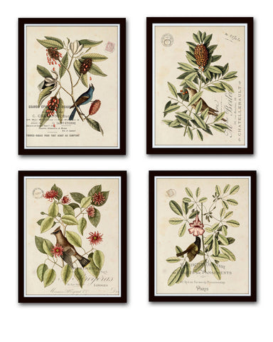 Vintage Bird and Botanical Print Set No.1 - Giclee Canvas Art Prints