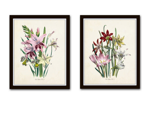 Les Lilies Botanical Print Set - Giclee - Canvas Print - Antique Botanical - Print - Poster -Wall Art Multiple Sizes Starting At Usd 15.00+