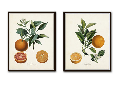 Vintage Citrus Orange Botanical Print Set - Giclee - Canvas Prints