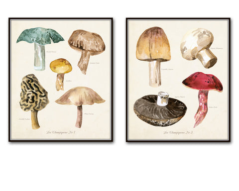 Watercolor Mushrooms Botanical Print Set