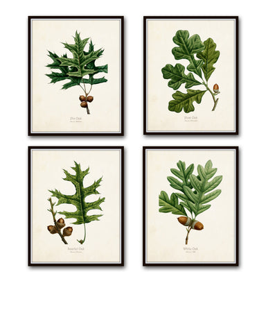 Oak Leaf Botanical Print Set No. 2