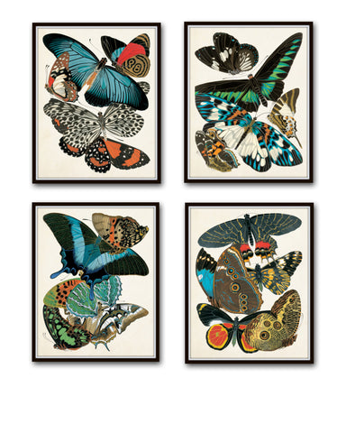 Butterfly Print Set - Seguy Art Nouveau Butterfly Prints