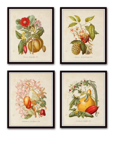 Botanical Tribes Print Set No. 52 - Giclee Art Prints