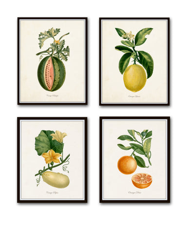 French Fruit Botanical Print Set No. 12