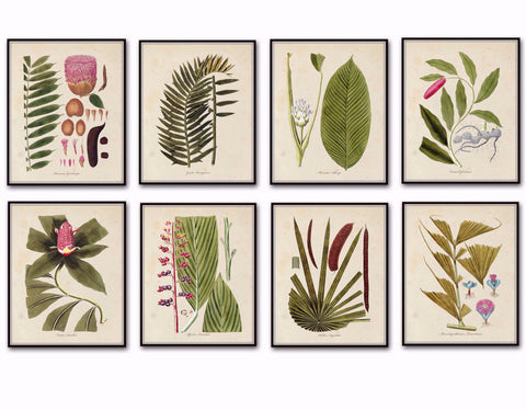 Botanical Palm Frond Print Set No. 5