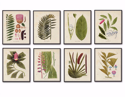 Fragmenta Botanical Print Set No. 5