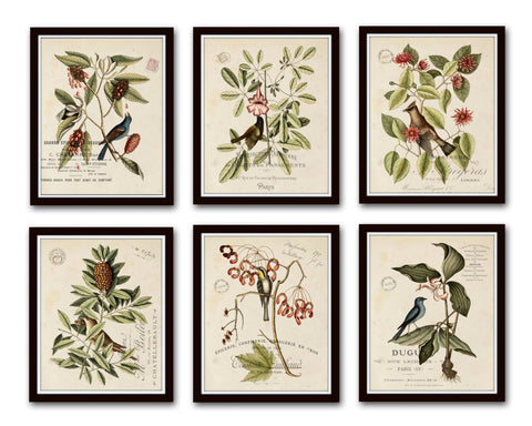 Vintage Bird and Botanical Print Set No.2 - Giclee Canvas Art Prints