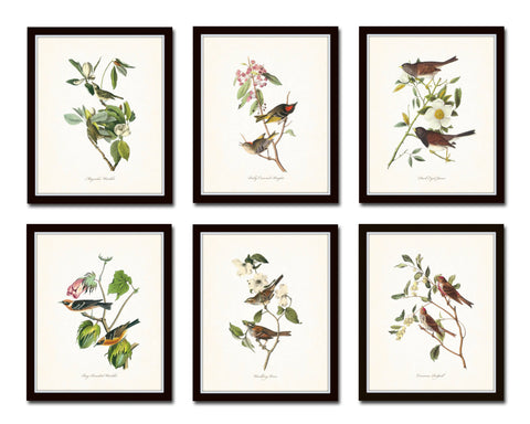 Audubon Bird Print Set No. 1