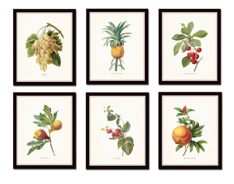 Antique Fruit Prints Set No. 2