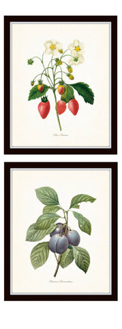 Three Antique Fruit Prints From Set No. 3