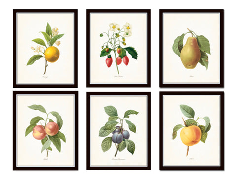 Antique Fruit Prints Set No. 3