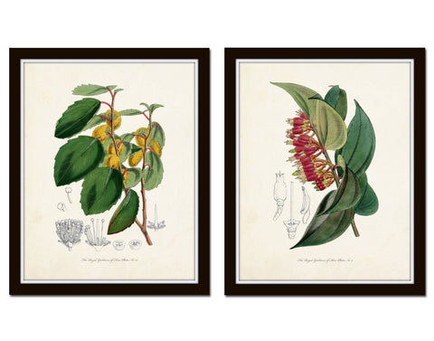 English Garden Botanical Print Set No. 7