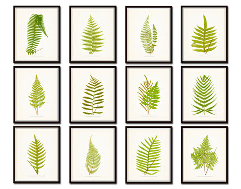Vintage Ferns Botanical Print Set No. 3