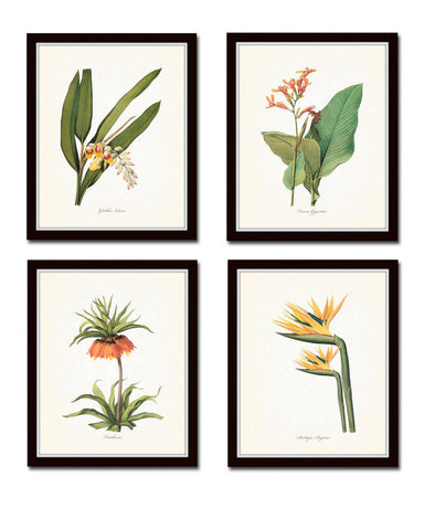 Tropical Botanicals Print Set No. 5