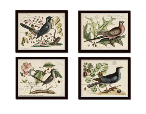 Vintage Bird and Botanical Print Set No. 7