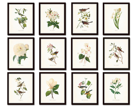 Bird and Botanical Print Set No. 10