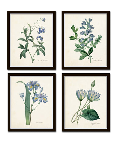 Redoute Blue Botanical Print Set