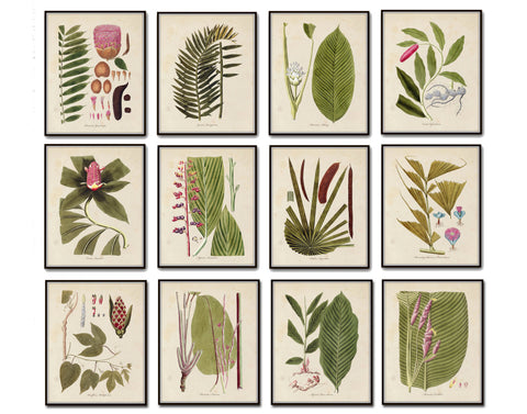 Palm Frond Botanical Print Set No. 15
