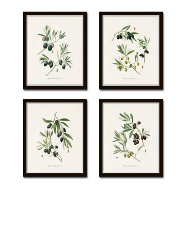 Antique Olive Print Set No. 1