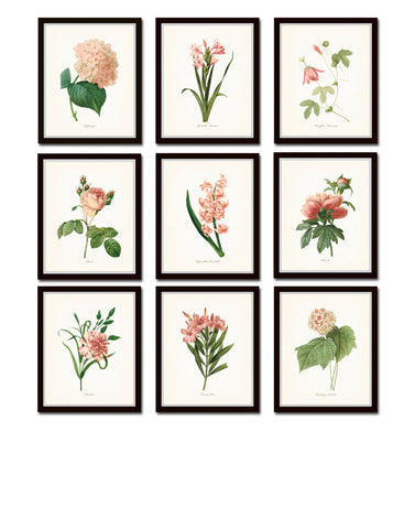 Pink Botanical Print Set No. 5 - Redoute Botanical Prints