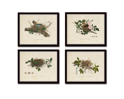 Vintage Bird Nests Print Set No. 2