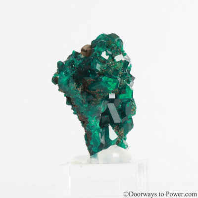 Dioptase Prosperity Crystal Specimen A +++ Museum Quality