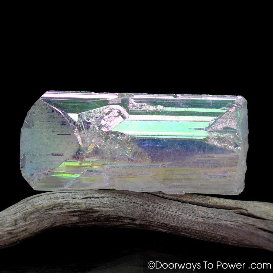 Angel Aura Danburite Synergy 12 Crystal w/ Pleiadian Starbrary