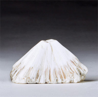 Scolecite Crystal Synergy 12 Stone