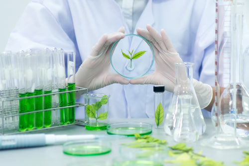 Industrial Biotechnology Internship
