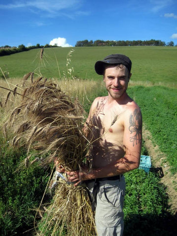Brockwell Baker Vincent Talleu, gathers Blue Cone Rivet heritage wheat at Perry Court Farm, Kent