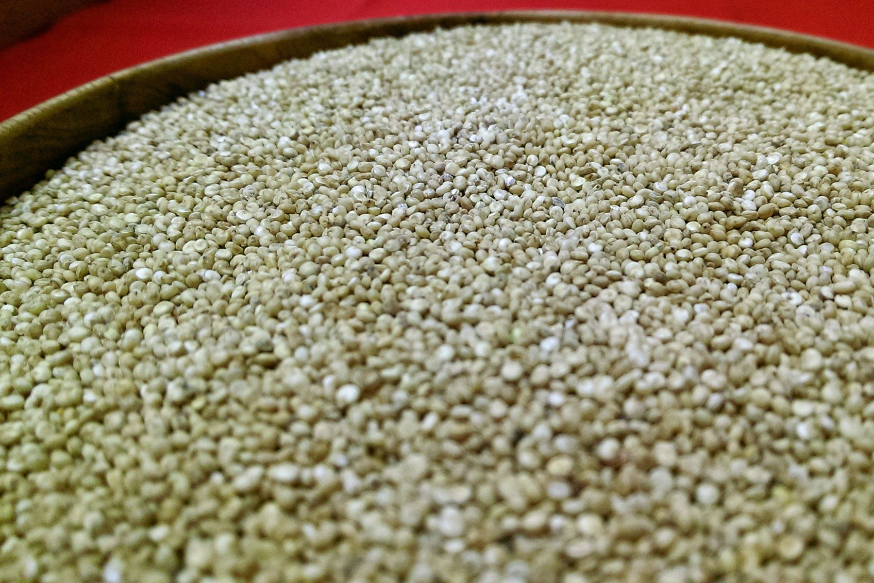 British-grown quinoa grain, ready for cooking