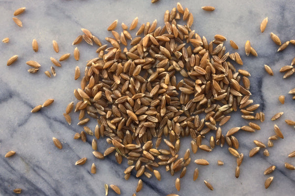 Emmer (Farro), Wholegrain - Hodmedod's British Pulses & Grains