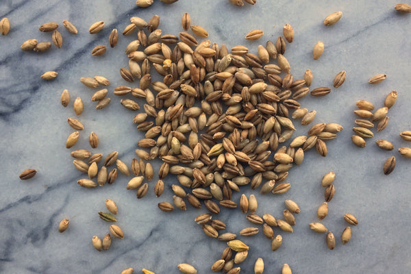 Naked Barley, Wholegrain, Organic - Hodmedod's British Pulses & Grains
